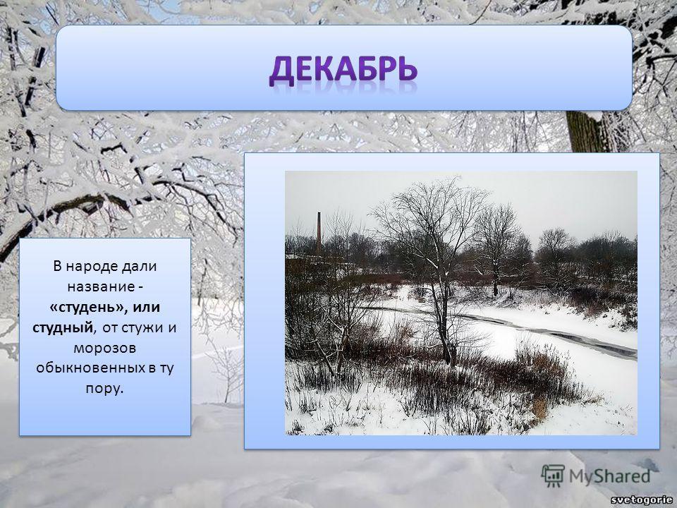 В народе дали название - «студень», или студный, от стужи и морозов обыкновенных в ту пору.