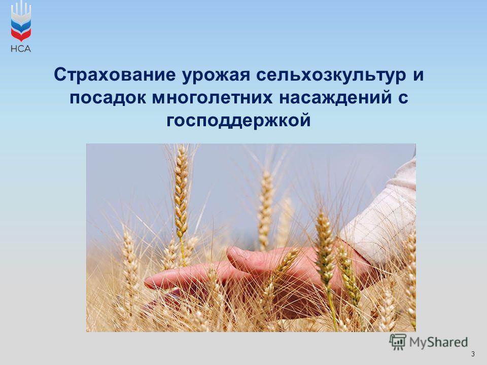3 Страхование урожая сельхозкультур и посадок многолетних насаждений с господдержкой
