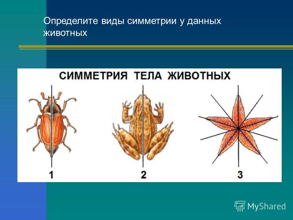 Определите виды симметрии у данных животных