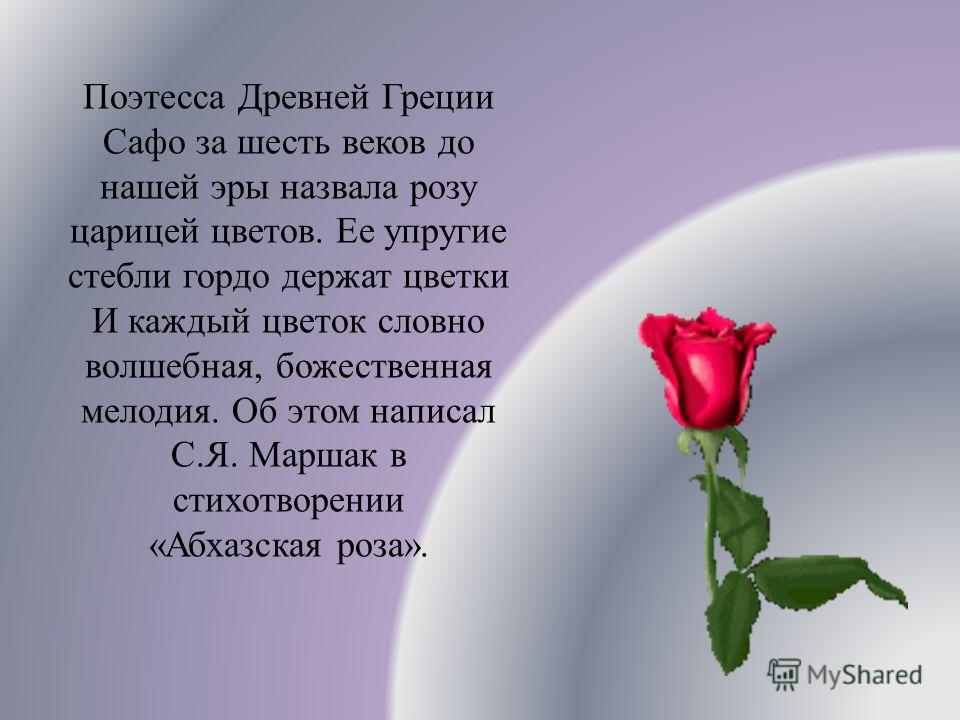 Поэтесса Древней Греции Сафо за шесть веков до нашей эры назвала розу царицей цветов. Ее упругие стебли гордо держат цветки И каждый цветок словно волшебная, божественная мелодия. Об этом написал С.Я. Маршак в стихотворении «Абхазская роза».