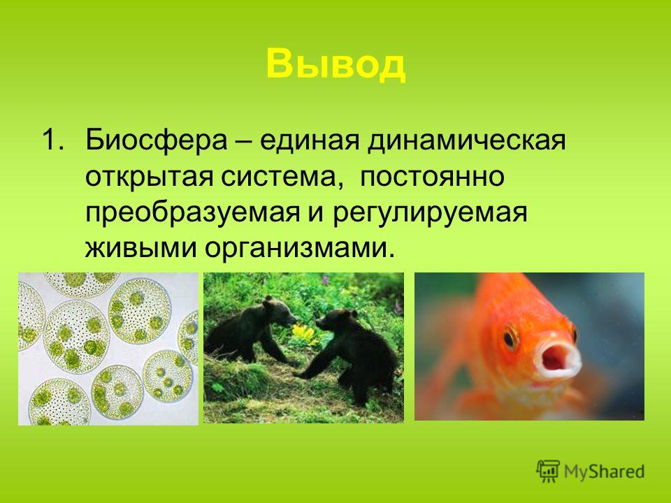 Вывод 1. Биосфера – единая динамическая открытая система, постоянно преобразуемая и регулируемая живыми организмами.