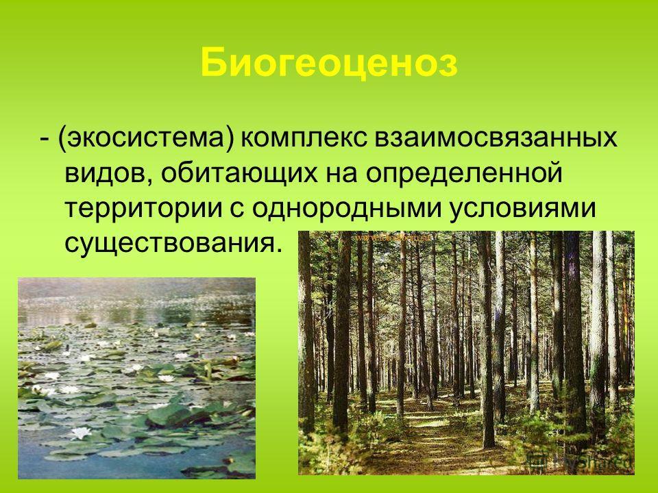 Биогеоценоз - (экосистема) комплекс взаимосвязанных видов, обитающих на определенной территории с однородными условиями существования.