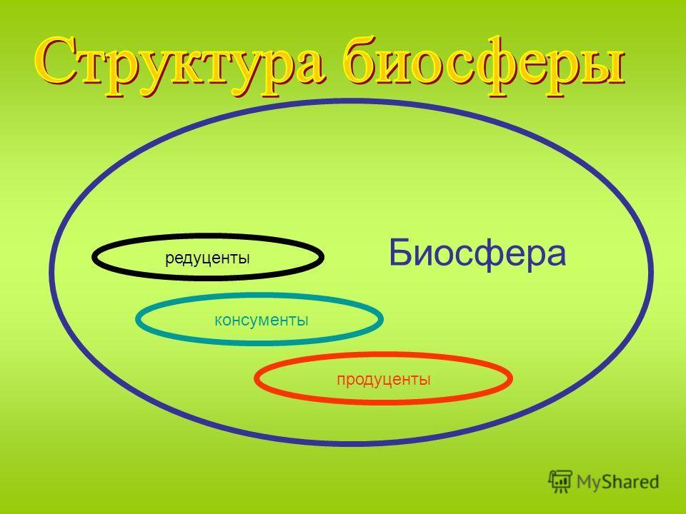 редуценты консументы продуценты Биосфера