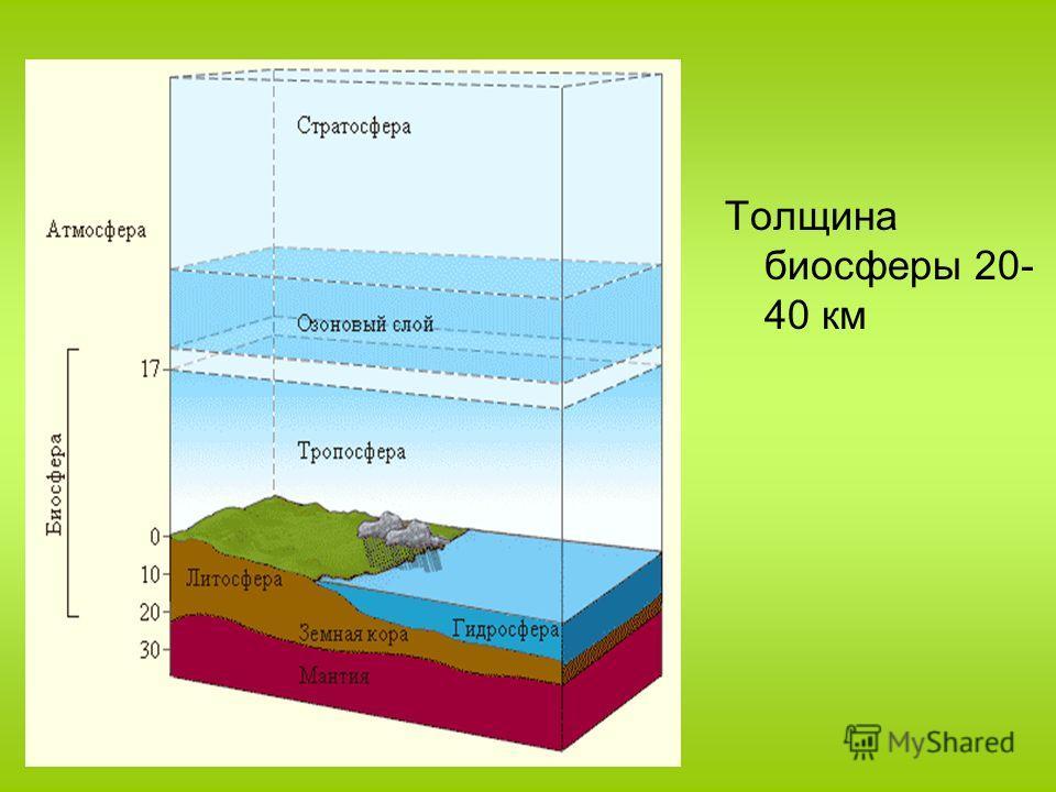 Толщина биосферы 20- 40 км