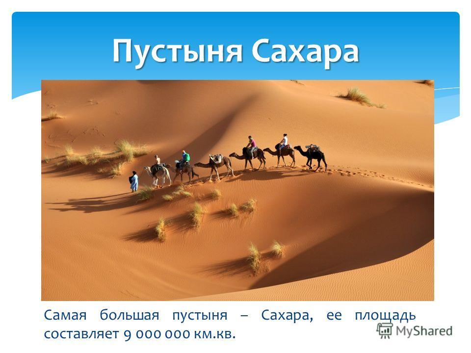 Самая большая пустыня – Сахара, ее площадь составляет 9 000 000 км.кв. Пустыня Сахара