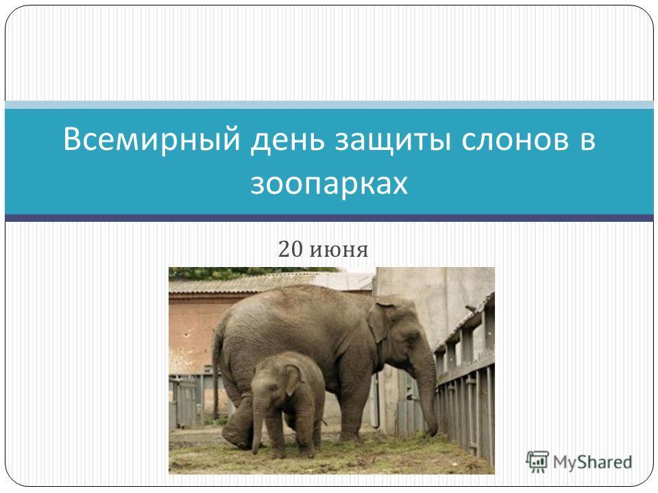 20 июня Всемирный день защиты слонов в зоопарках