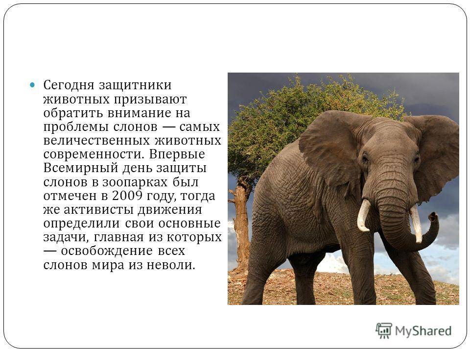Сегодня защитники животных призывают обратить внимание на проблемы слонов самых величественных животных современности. Впервые Всемирный день защиты слонов в зоопарках был отмечен в 2009 году, тогда же активисты движения определили свои основные зада
