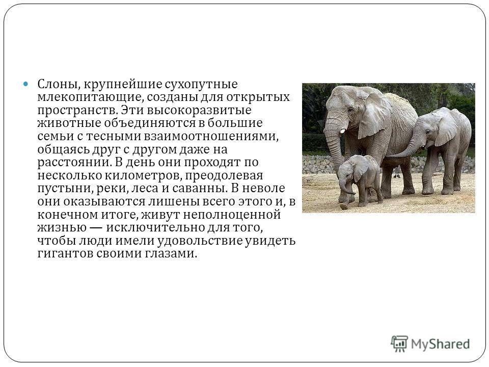 Слоны, крупнейшие сухопутные млекопитающие, созданы для открытых пространств. Эти высокоразвитые животные объединяются в большие семьи с тесными взаимоотношениями, общаясь друг с другом даже на расстоянии. В день они проходят по несколько километров,