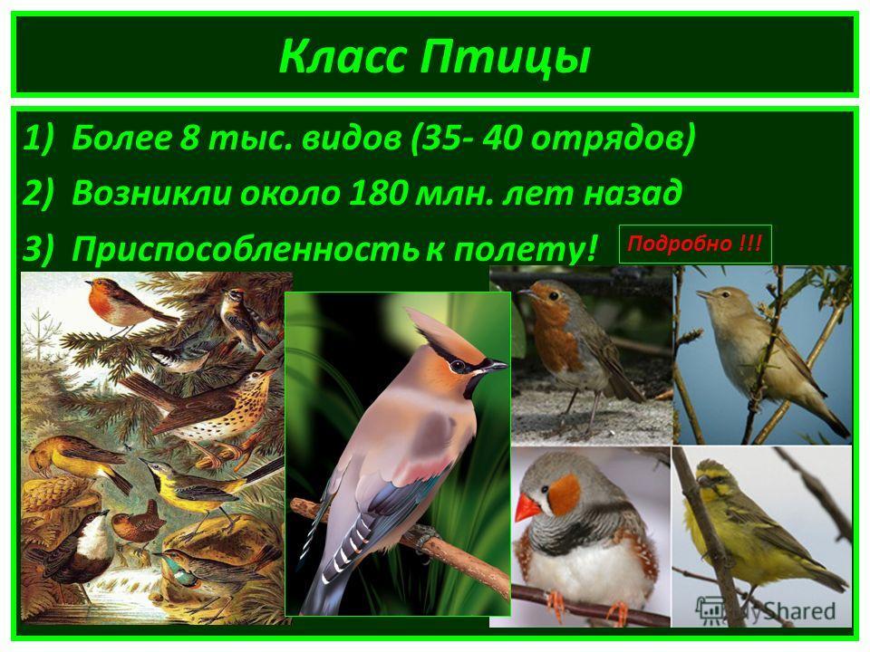 Класс Птицы 1)Более 8 тыс. видов (35- 40 отрядов) 2)Возникли около 180 млн. лет назад 3)Приспособленность к полету! Подробно !!!