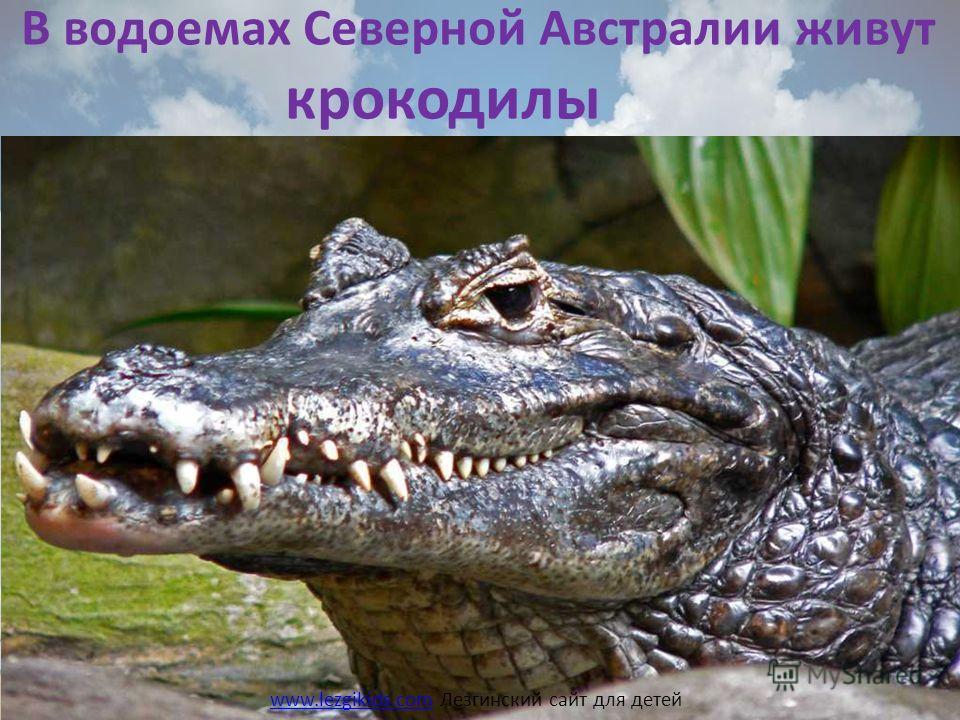 В водоемах Северной Австралии живут крокодилы www.lezgikids.comwww.lezgikids.com Лезгинский сайт для детей