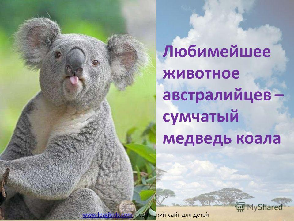 Любимейшее животное австралийцев – сумчатый медведь коала www.lezgikids.comwww.lezgikids.com Лезгинский сайт для детей
