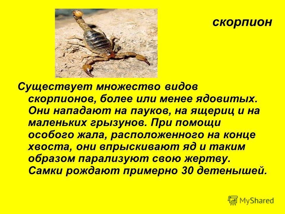 Существует множество видов скорпионов, более или менее ядовитых. Они нападают на пауков, на ящериц и на маленьких грызунов. При помощи особого жала, расположенного на конце хвоста, они впрыскивают яд и таким образом парализуют свою жертву. Самки рожд
