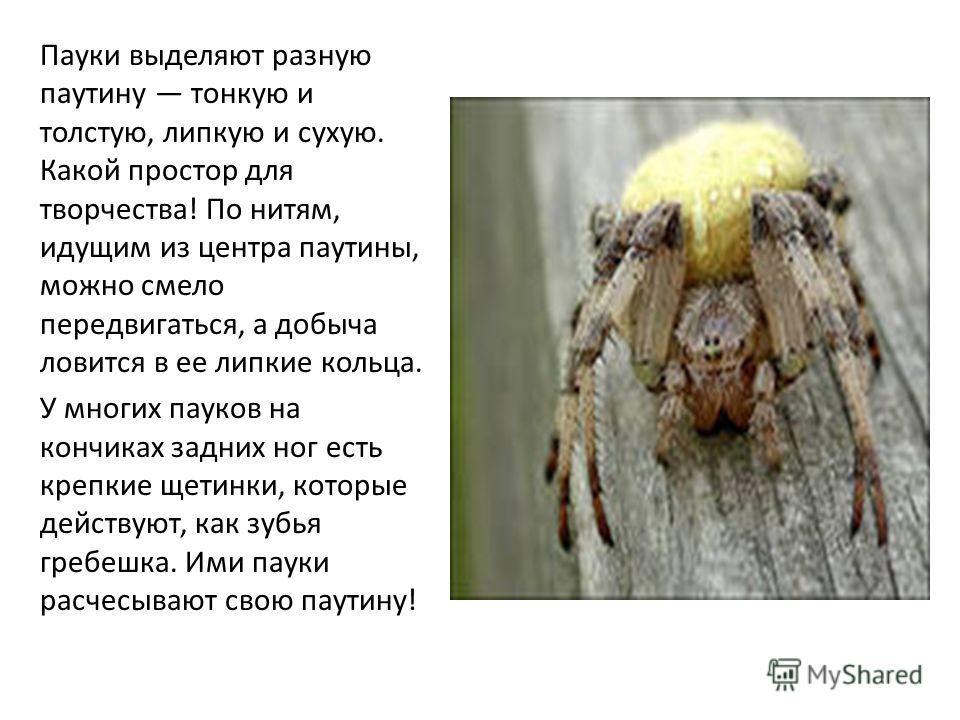 Пауки выделяют разную паутину тонкую и толстую, липкую и сухую. Какой простор для творчества! По нитям, идущим из центра паутины, можно смело передвигаться, а добыча ловится в ее липкие кольца. У многих пауков на кончиках задних ног есть крепкие щети