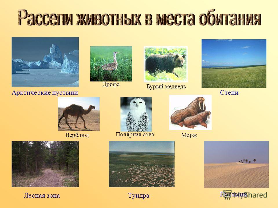 Арктические пустыни Степи Лесная зона Тундра Пустыни Дрофа Бурый медведь Верблюд Полярная сова Морж