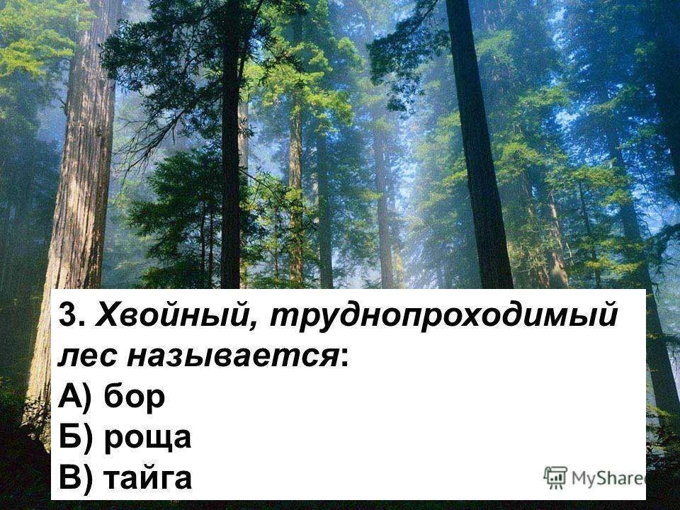 3. Хвойный, труднопроходимый лес называется: А) бор Б) роща В) тайга
