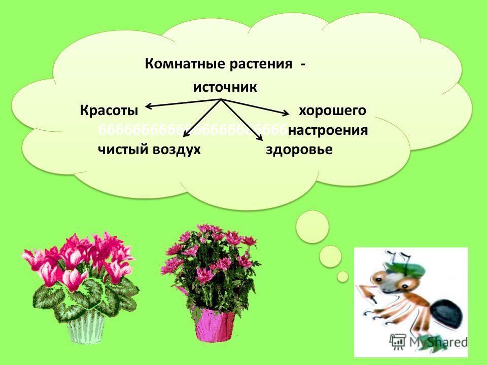 Комнатные растения - источник Красоты хорошего ббббббббббббббббббббббнастроения чистый воздух здоровье Комнатные растения - источник Красоты хорошего ббббббббббббббббббббббнастроения чистый воздух здоровье