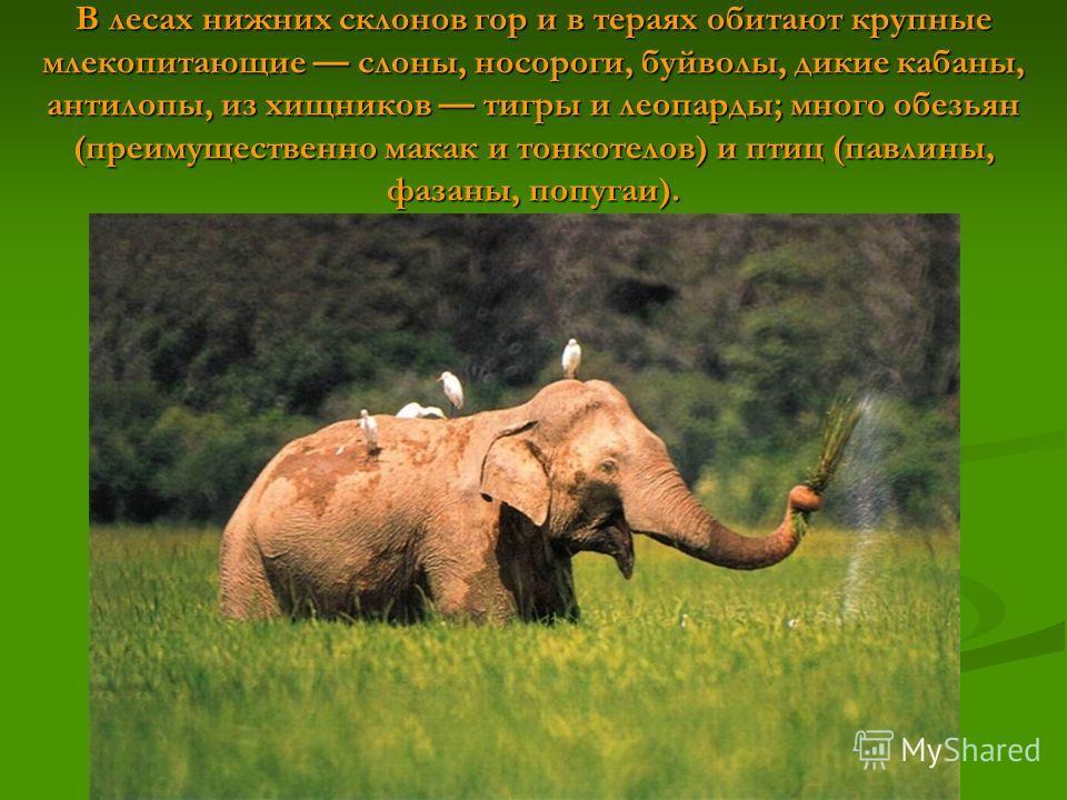 В лесах нижних склонов гор и в тераях обитают крупные млекопитающие слоны, носороги, буйволы, дикие кабаны, антилопы, из хищников тигры и леопарды; много обезьян (преимущественно макак и тонкотелов) и птиц (павлины, фазаны, попугаи).