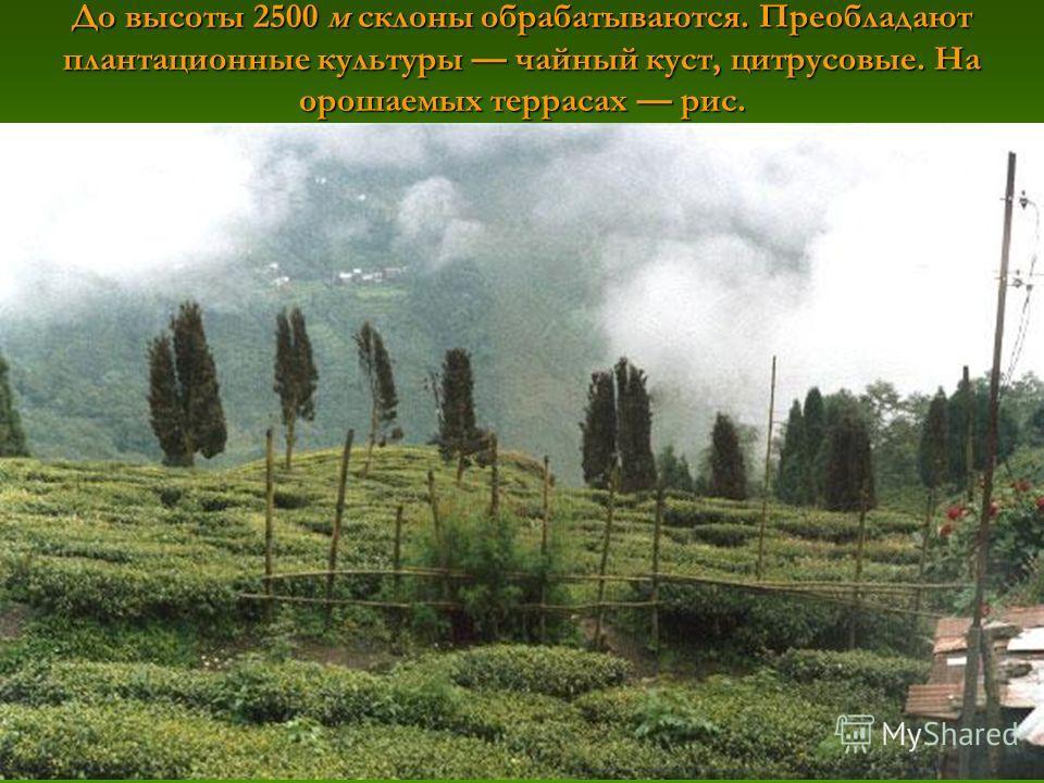 До высоты 2500 м склоны обрабатываются. Преобладают плантационные культуры чайный куст, цитрусовые. На орошаемых террасах рис.