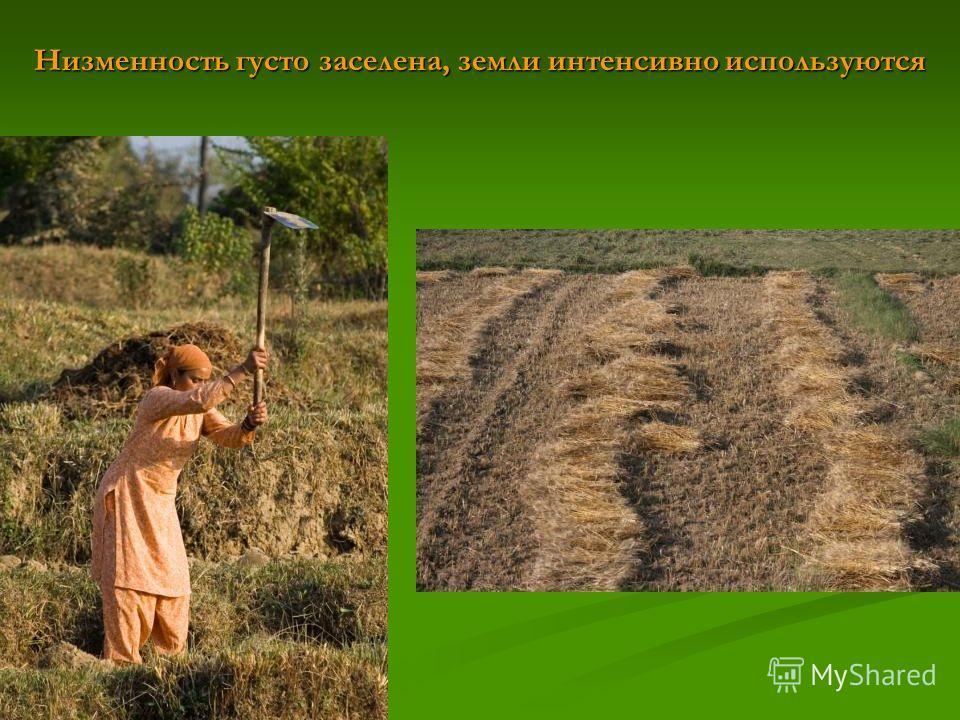 Низменность густо заселена, земли интенсивно используются