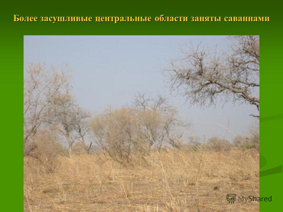 Более засушливые центральные области заняты саваннами