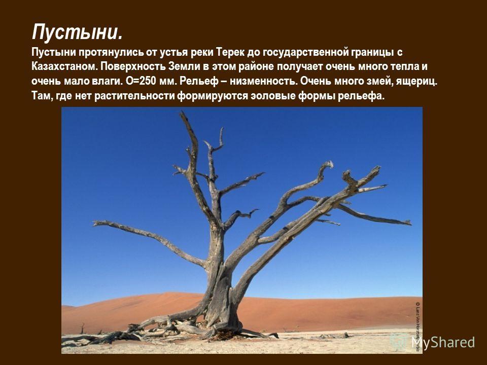 Пустыни. Пустыни протянулись от устья реки Терек до государственной границы с Казахстаном. Поверхность Земли в этом районе получает очень много тепла и очень мало влаги. О=250 мм. Рельеф – низменность. Очень много змей, ящериц. Там, где нет раститель