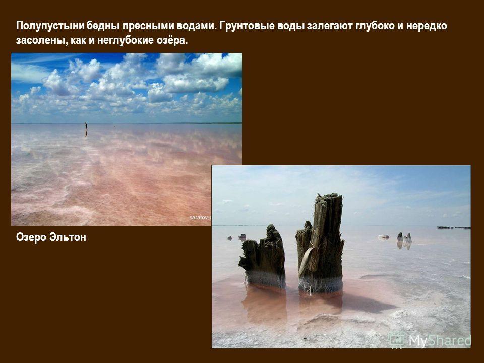 Полупустыни бедны пресными водами. Грунтовые воды залегают глубоко и нередко засолены, как и неглубокие озёра. Озеро Эльтон
