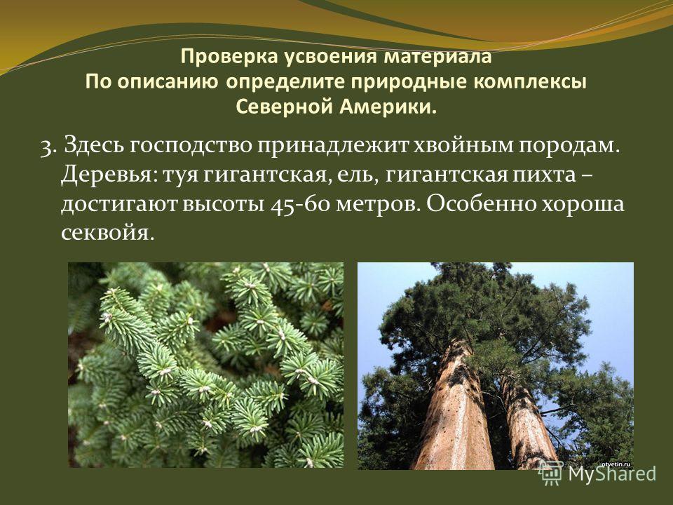 Проверка усвоения материала По описанию определите природные комплексы Северной Америки. 3. Здесь господство принадлежит хвойным породам. Деревья: туя гигантская, ель, гигантская пихта – достигают высоты 45-60 метров. Особенно хороша секвойя.