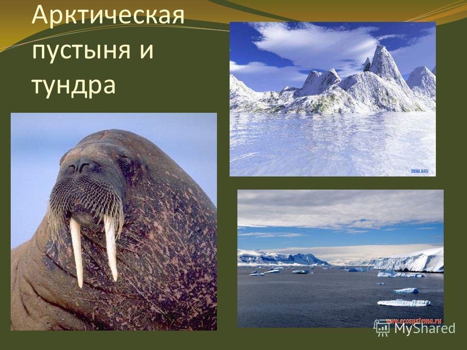 Арктическая пустыня и тундра