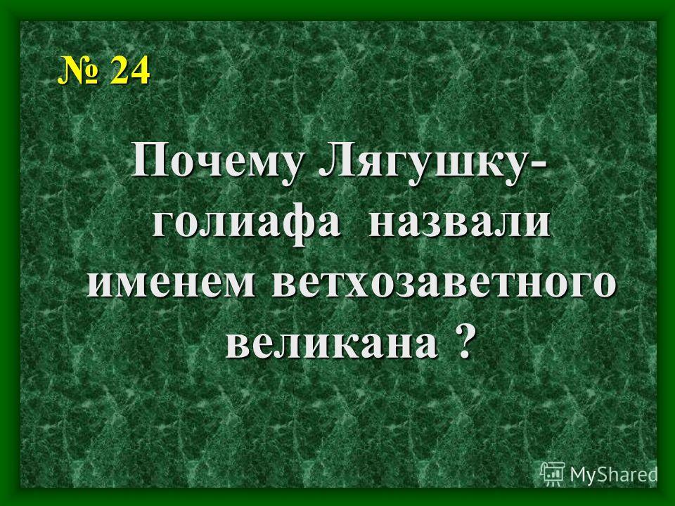 24 24 Почему Лягушку- голиафа назвали именем ветхозаветного великана ?