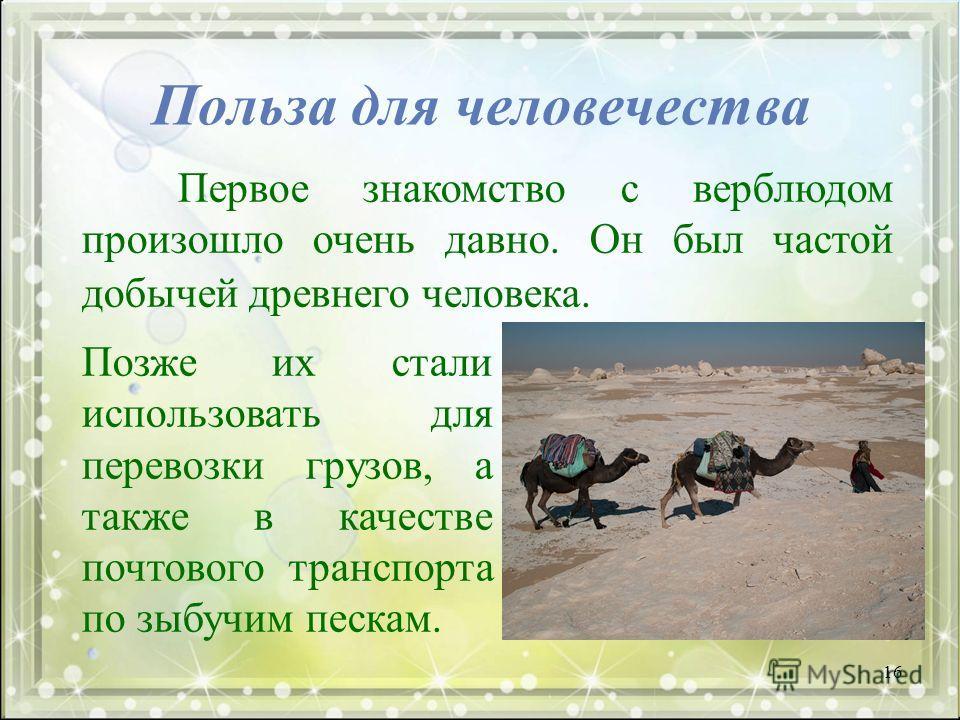 Польза для человечества Первое знакомство с верблюдом произошло очень давно. Он был частой добычей древнего человека. Позже их стали использовать для перевозки грузов, а также в качестве почтового транспорта по зыбучим пескам. 16
