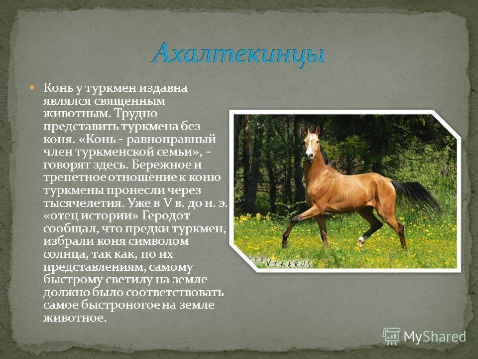 Конь у туркмен издавна являлся священным животным. Трудно представить туркмена без коня. «Конь - равноправный член туркменской семьи», - говорят здесь. Бережное и трепетное отношение к коню туркмены пронесли через тысячелетия. Уже в V в. до н. э. «от