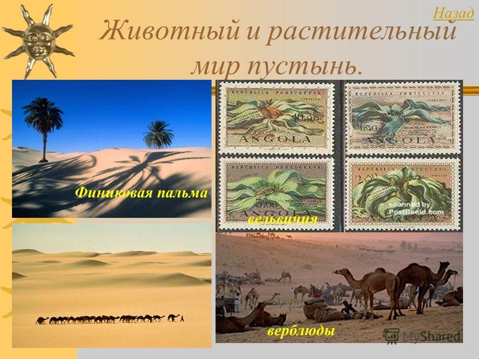 Животный и растительный мир пустынь. Финиковая пальма вельвичия верблюды Назад
