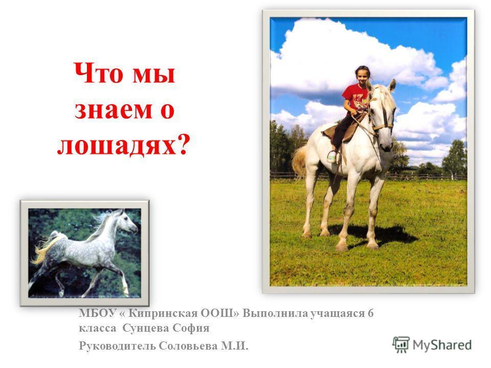 Что мы знаем о лошадях? МБОУ « Кипринская ООШ» Выполнила учащаяся 6 класса Сунцева София Руководитель Соловьева М.И.
