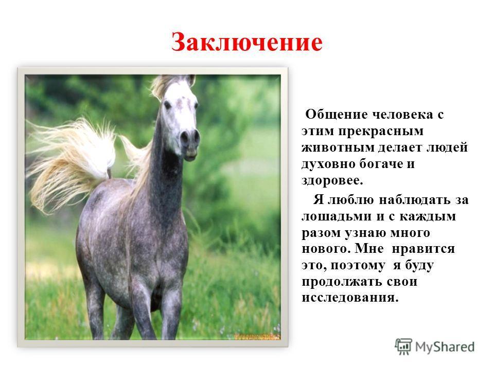 Заключение Общение человека с этим прекрасным животным делает людей духовно богаче и здоровее. Я люблю наблюдать за лошадьми и с каждым разом узнаю много нового. Мне нравится это, поэтому я буду продолжать свои исследования.