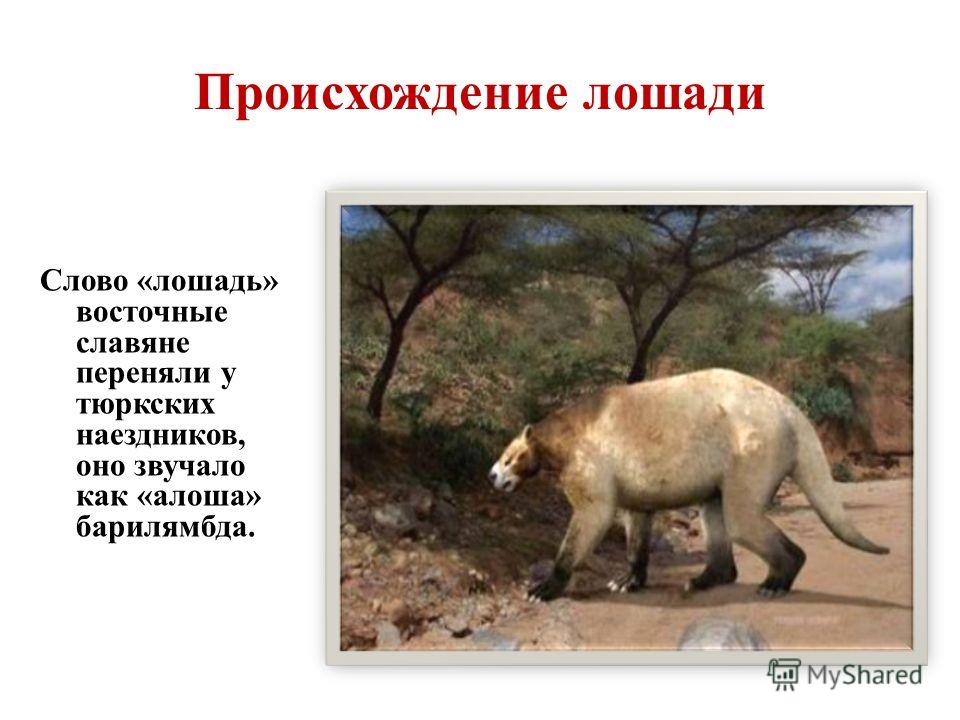 Происхождение лошади Слово «лошадь» восточные славяне переняли у тюркских наездников, оно звучало как «алеша» барилямбда.