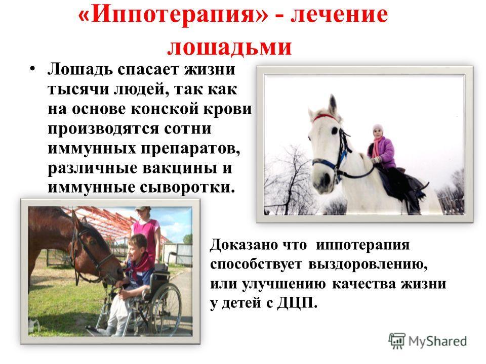 « Иппотерапия» - лечение лошадьми Доказано что иппотерапия способствует выздоровлению, или улучшению качества жизни у детей с ДЦП. Лошадь спасает жизни тысячи людей, так как на основе конской крови производятся сотни иммунных препаратов, различные ва