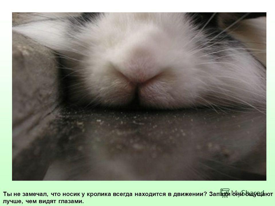 Ты не замечал, что носик у кролика всегда находится в движении? Запахи они ощущают лучше, чем видят глазами.