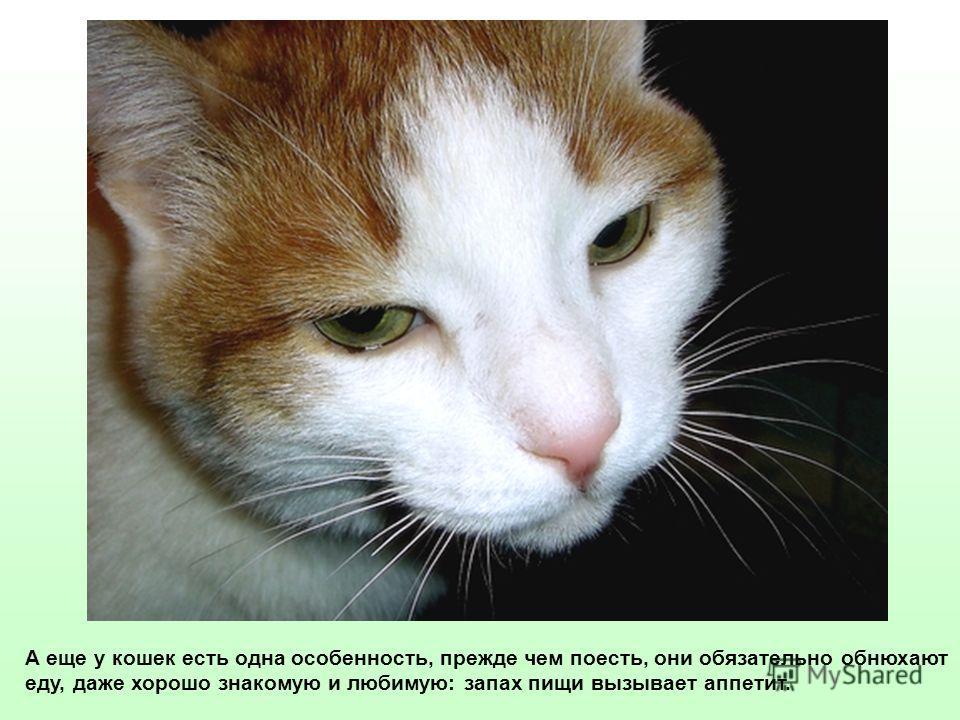 А еще у кошек есть одна особенность, прежде чем поесть, они обязательно обнюхают еду, даже хорошо знакомую и любимую: запах пищи вызывает аппетит.