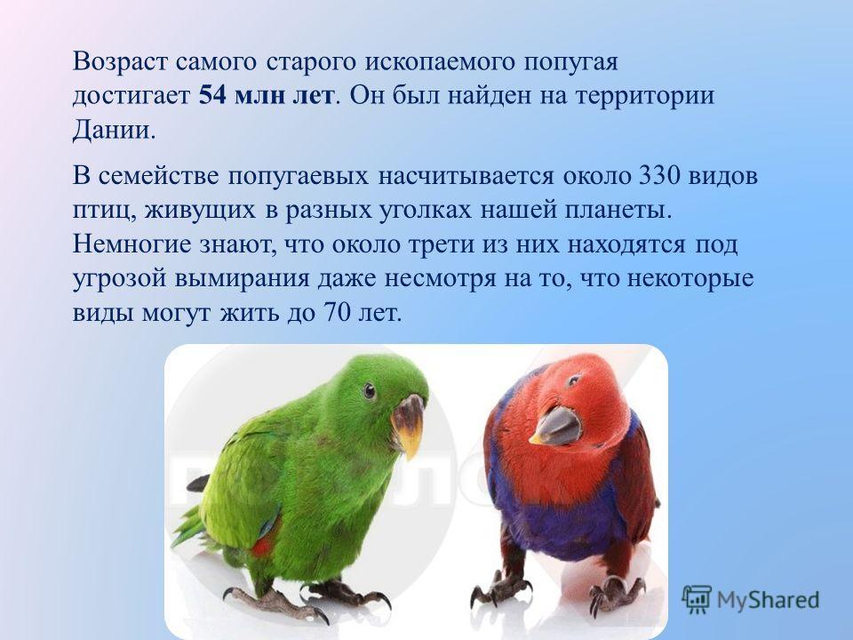 В семействе попугаевых насчитывается около 330 видов птиц, живущих в разных уголках нашей планеты. Немногие знают, что около трети из них находятся под угрозой вымирания даже несмотря на то, что некоторые виды могут жить до 70 лет. Возраст самого ста