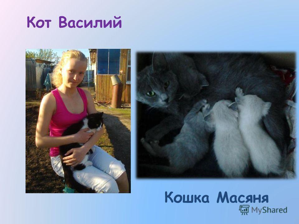 Кот Василий Кошка Масяня