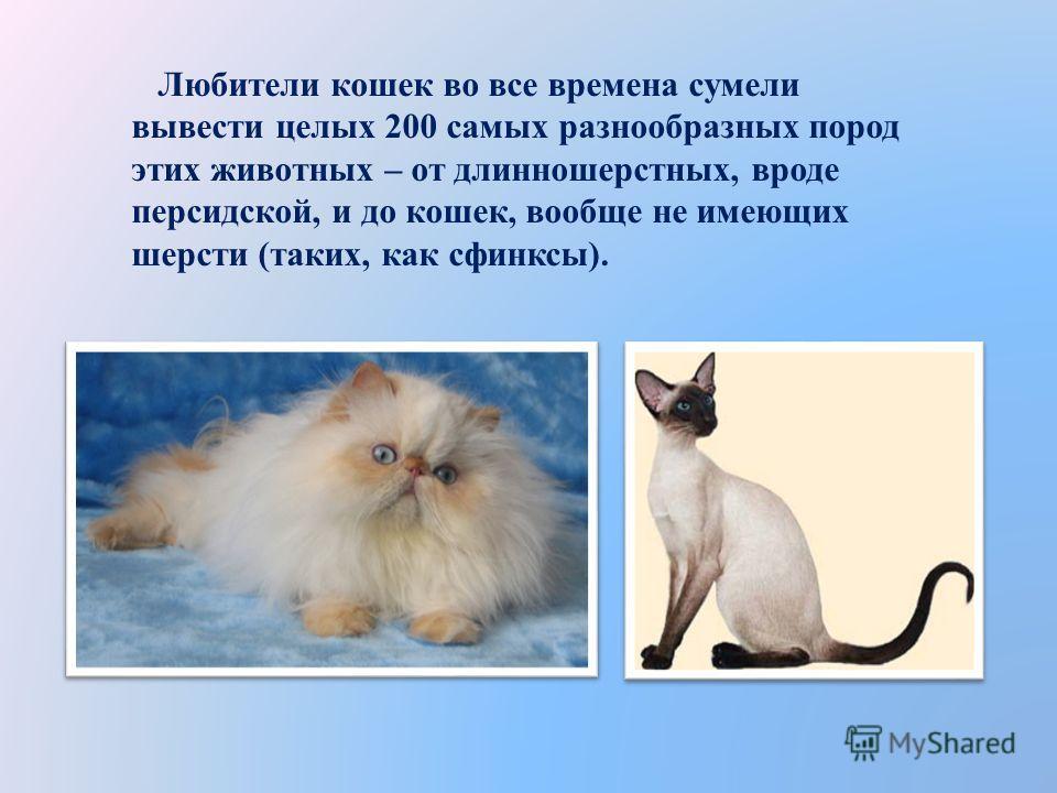 Любители кошек во все времена сумели вывести целых 200 самых разнообразных пород этих животных – от длинношерстных, вроде персидской, и до кошек, вообще не имеющих шерсти (таких, как сфинксы).