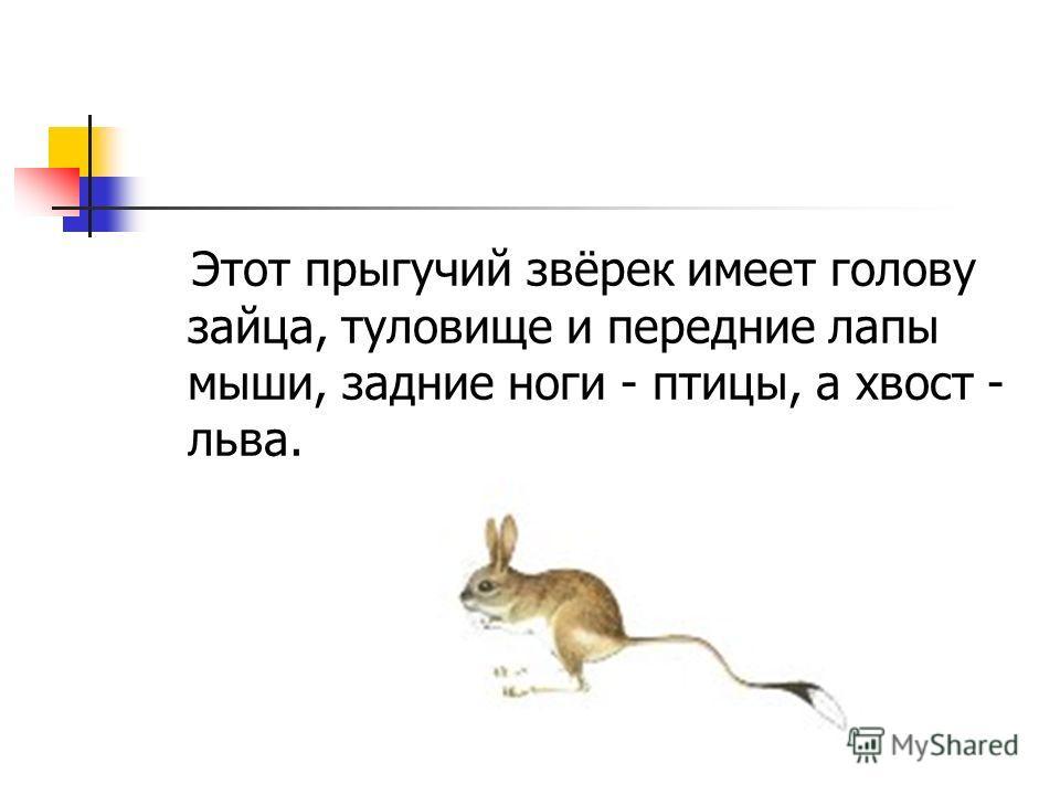 Этот прыгучий звёрек имеет голову зайца, туловище и передние лапы мыши, задние ноги - птицы, а хвост - льва.