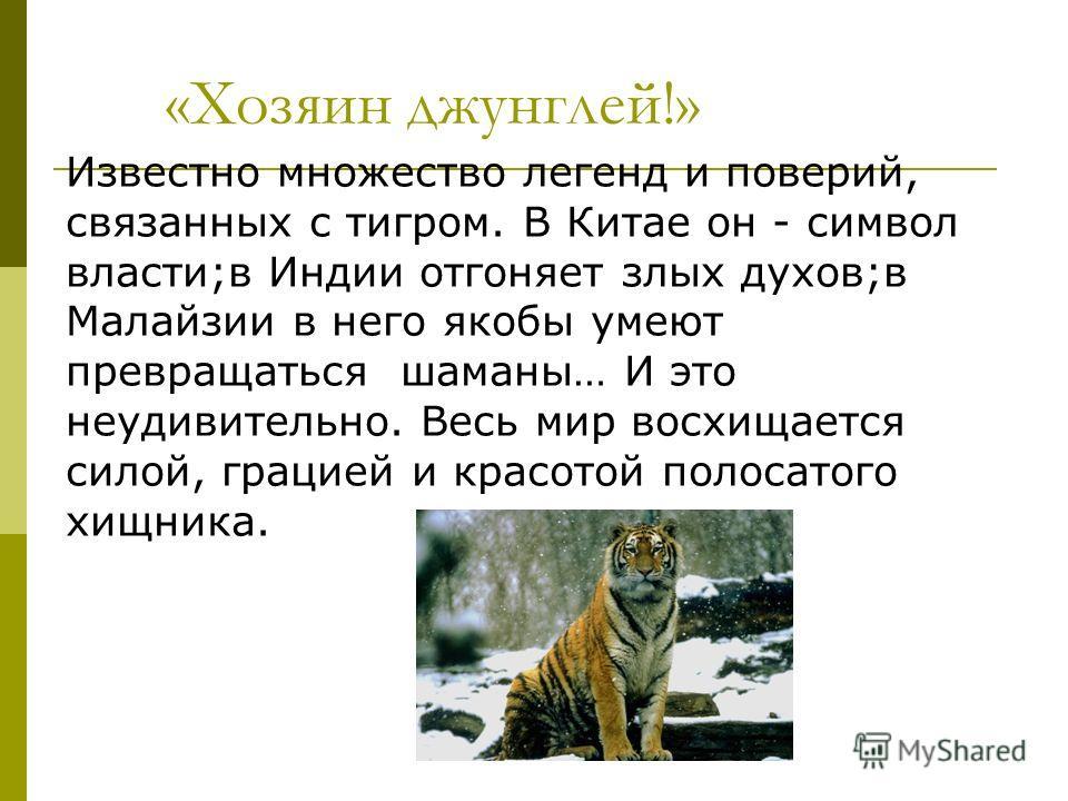 «Хозяин джунглей!» Известно множество легенд и поверий, связанных с тигром. В Китае он - символ власти;в Индии отгоняет злых духов;в Малайзии в него якобы умеют превращаться шаманы… И это неудивительно. Весь мир восхищается силой, грацией и красотой