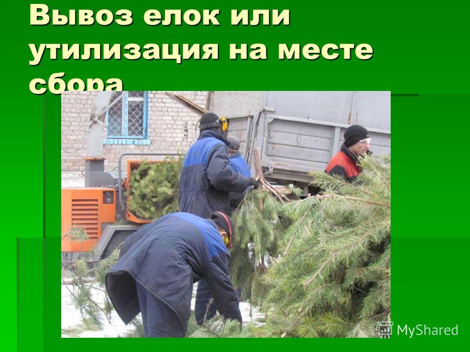 Вывоз елок или утилизация на месте сбора