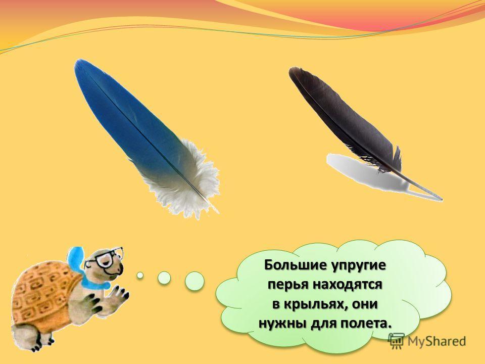 СТЕРЖЕНЬ БОРОЗДКИ Найдите самое маленькое и самое большое перо. Сравните их на ощупь. Для чего птице нужны разные перья?