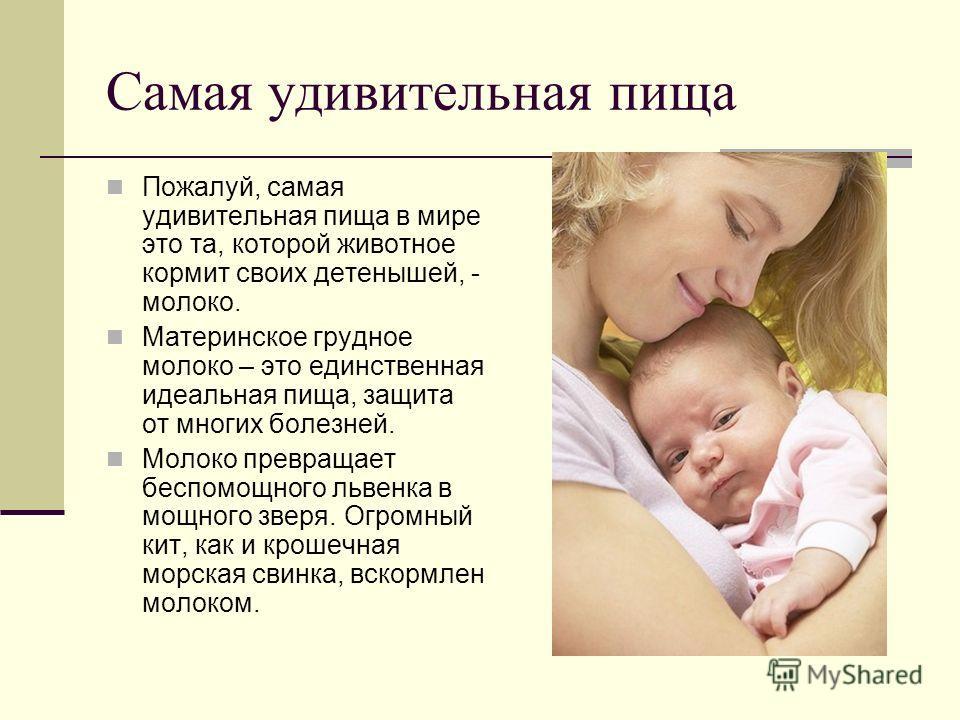 Самая удивительная пища Пожалуй, самая удивительная пища в мире это та, которой животное кормит своих детенышей, - молоко. Материнское грудное молоко – это единственная идеальная пища, защита от многих болезней. Молоко превращает беспомощного львенка