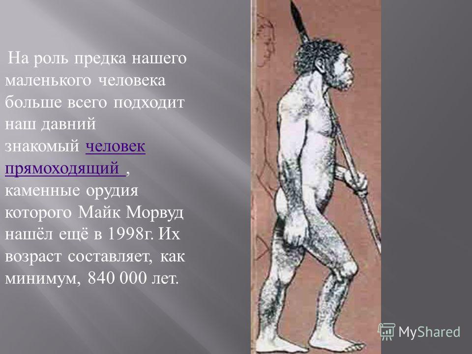 На роль предка нашего маленького человека больше всего подходит наш давний знакомый человек прямоходящий, каменные орудия которого Майк Морвуд нашёл ещё в 1998 г. Их возраст составляет, как минимум, 840 000 лет. человек прямоходящий
