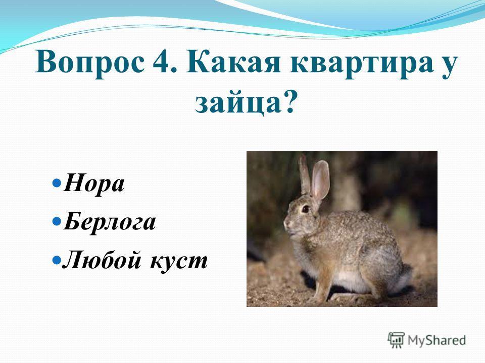 Вопрос 4. Какая квартира у зайца? Нора Берлога Любой куст