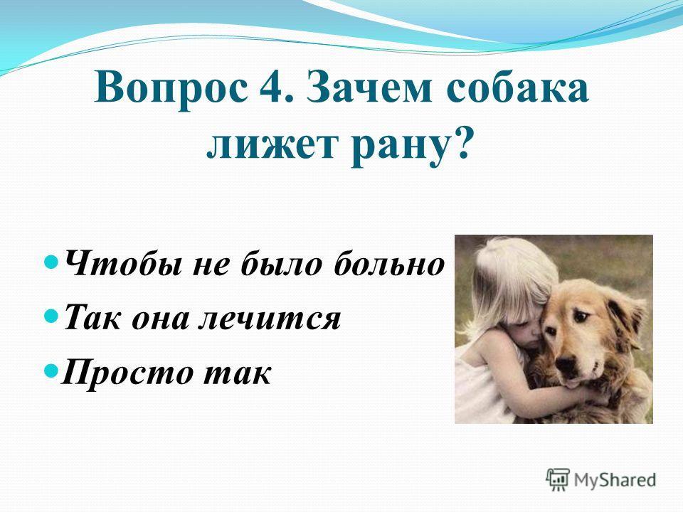 Вопрос 4. Зачем собака лижет рану? Чтобы не было больно Так она лечится Просто так