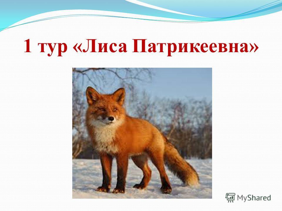 1 тур «Лиса Патрикеевна»